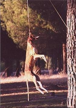 Image result for The Hanging of the Galgos spain