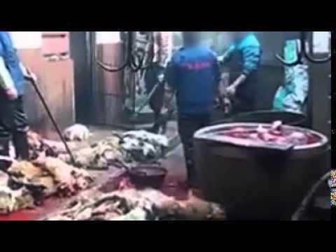 Petici n animalistas no mas matanza de perros en china for No mas 900 oficina directa