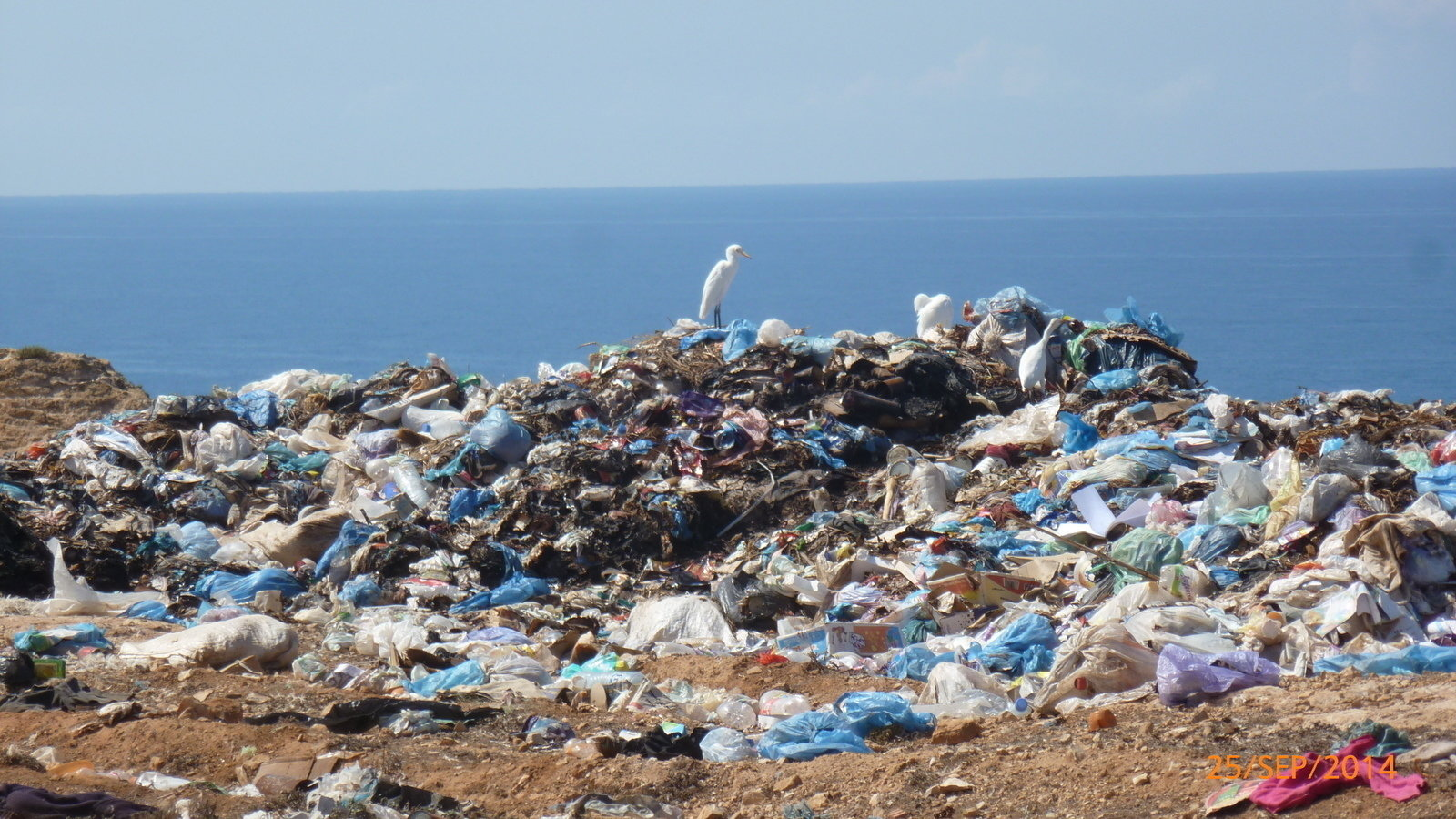 plastic pollution We call out the top companies that pollute our oceans with their plastic packaging.