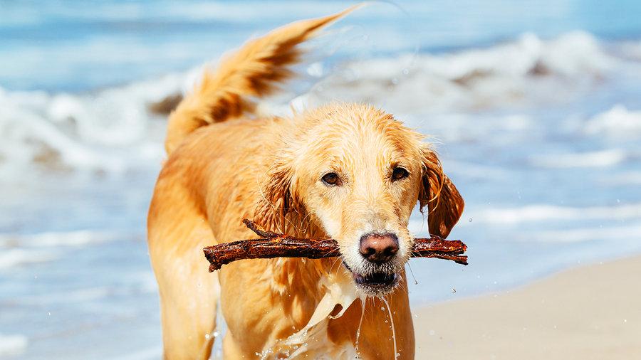 Ocean Beach Fire Island Dog Friendly