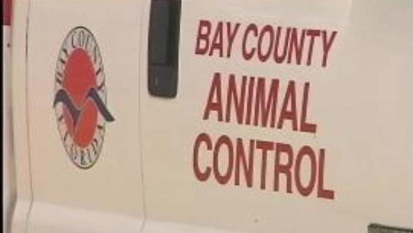 Bay County Please Remove Kathy Beatson as Animal Control Director