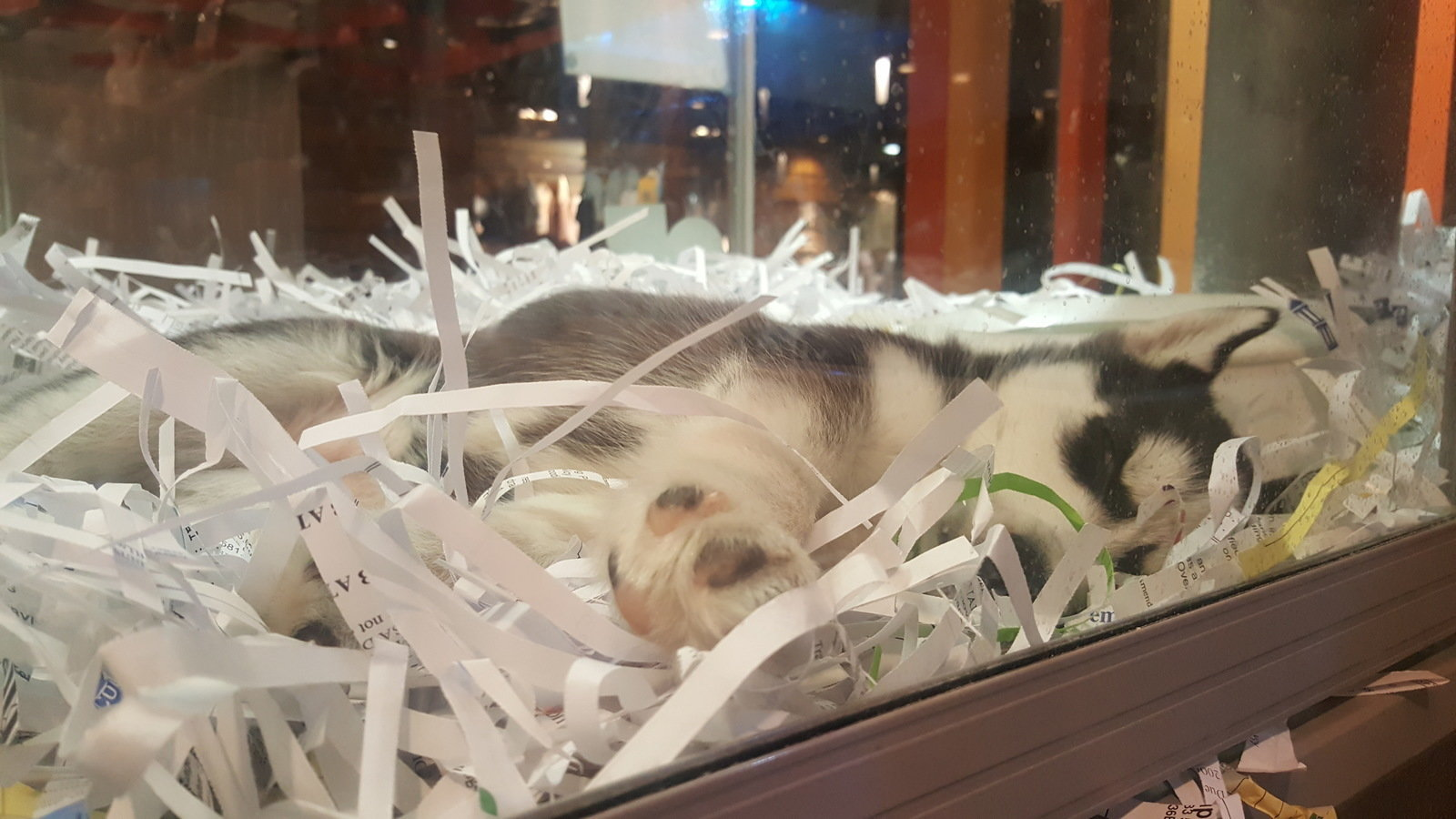 Down Pillows Animal Cruelty : Petition ? rspca : Shut down @Pets Melbournce Central due to Animal cruelty ? Change.org