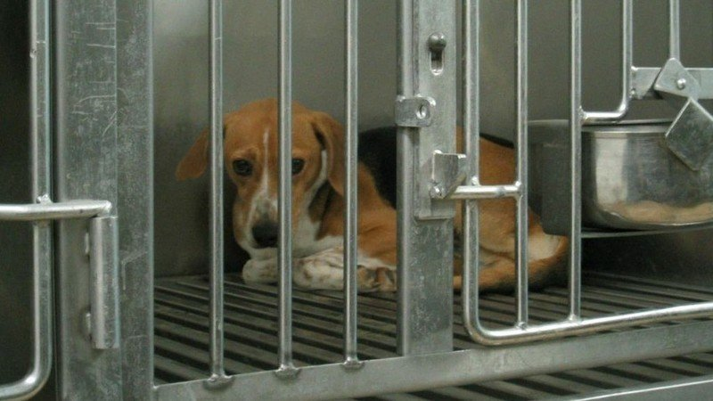 Petition David Cameron Mp Fight Against Beagle Breeding Centre