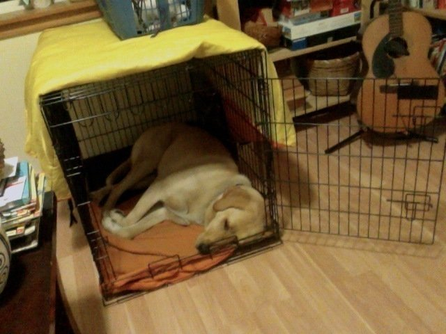 My Dog Can T Stand The Crate
