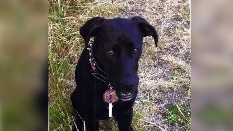 Petition · Justice For Kona: Felony Animal Cruelty Warrants