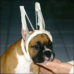 Petition 183 American Kennel Club Ban Tail Docking Ear