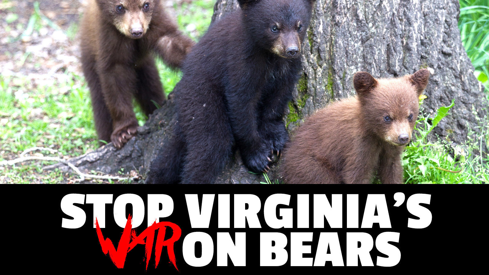 Executive Director Robert W. Duncan: Stop The War On Virginia's Bears