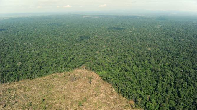 Petition United Nations And Logger Augustin Villa Are Cutting