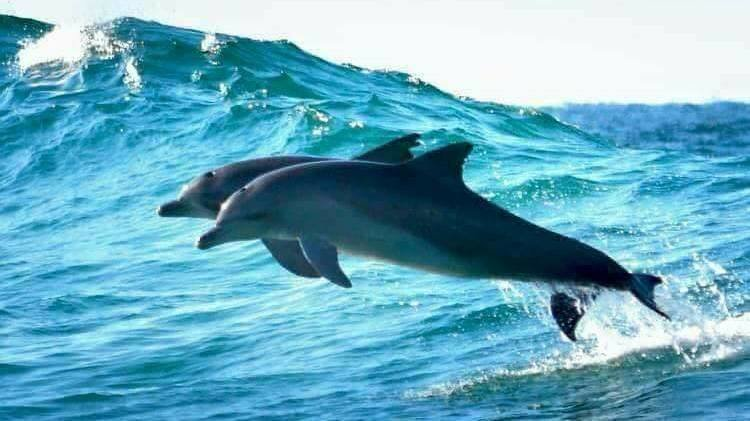 Petition update · CASE OF ATTICA PARK DOLPHIN POOLS WATER- ONE BIG