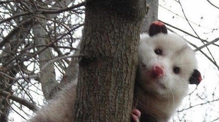 petition · apple should make a possum emoji · change