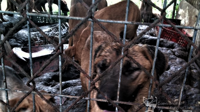 Petition update · PICK UP THE PHONE FOR THE KOREAN ANIMALS TODAY