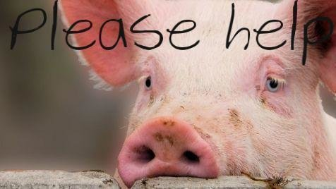 Petition · Craigslist: Craigslist, Stop the Selling of Animals on