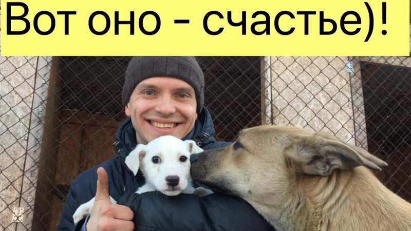История двух неразлучных собак