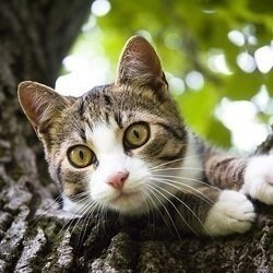 Jeune chatte douce photos