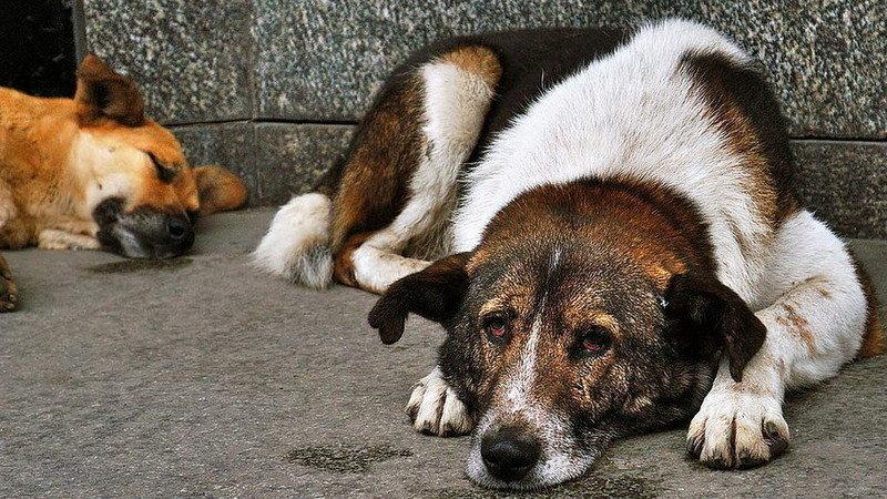 Куряне в петиции просят создать приют для бездомных животных