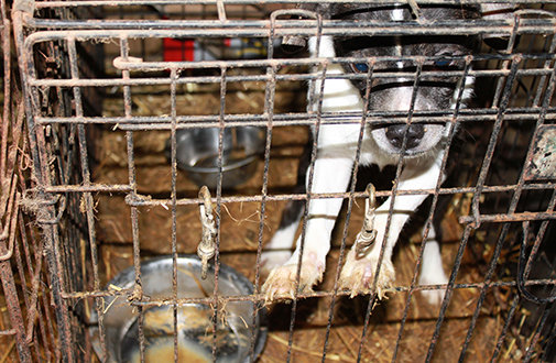 Petition · U S  Senate: Put An End To Puppy Mills! · Change org