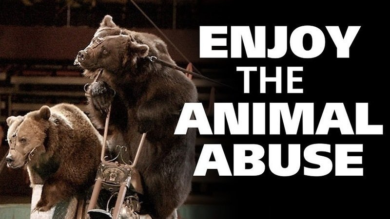 animal abuse in the circus