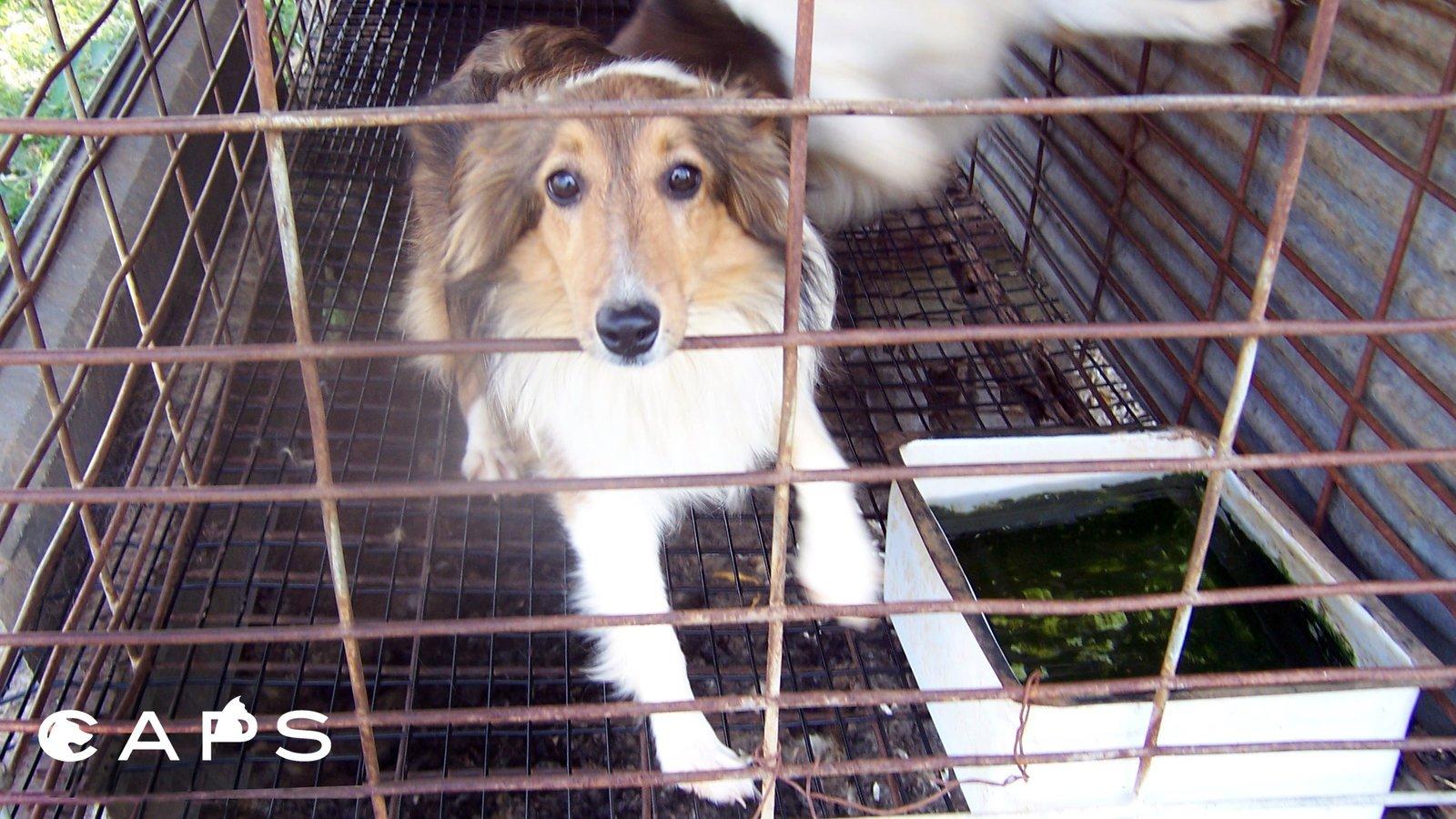 Dog Breeding Access Database On Demand