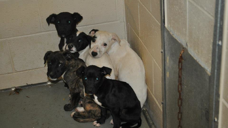 Petition 183 Ban Heart Stick Killing Of Shelter Pets In All