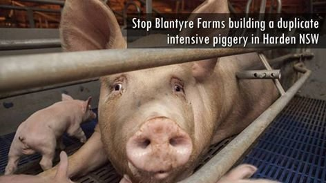 piggery project proposal for acankwete piggery