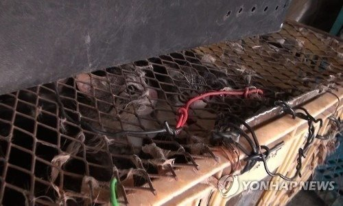 Petition · South Korea: Punish the Man who Boiled Alive 600