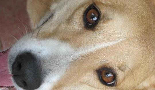 Petition · VCA Animal Hospitals Vethical: Recall the Toxic