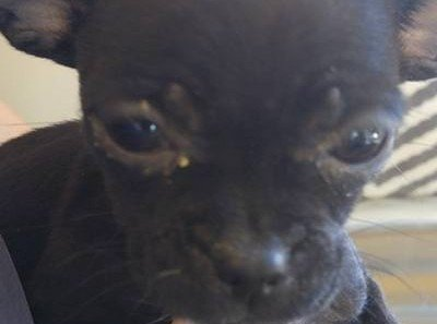 Petition · American Fork City Officials: Shut Down Puppy