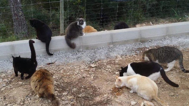 Petición · No a la retirada de la colonia felina legalizada de ...