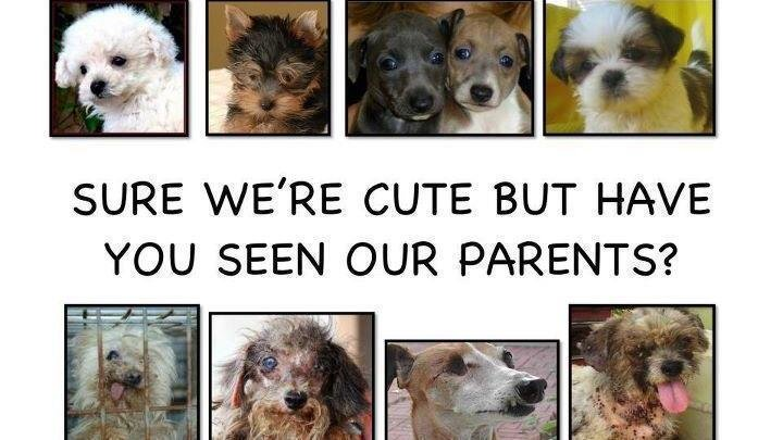 Petition · Elizabeth Esty: Stop puppy-mills · Change org
