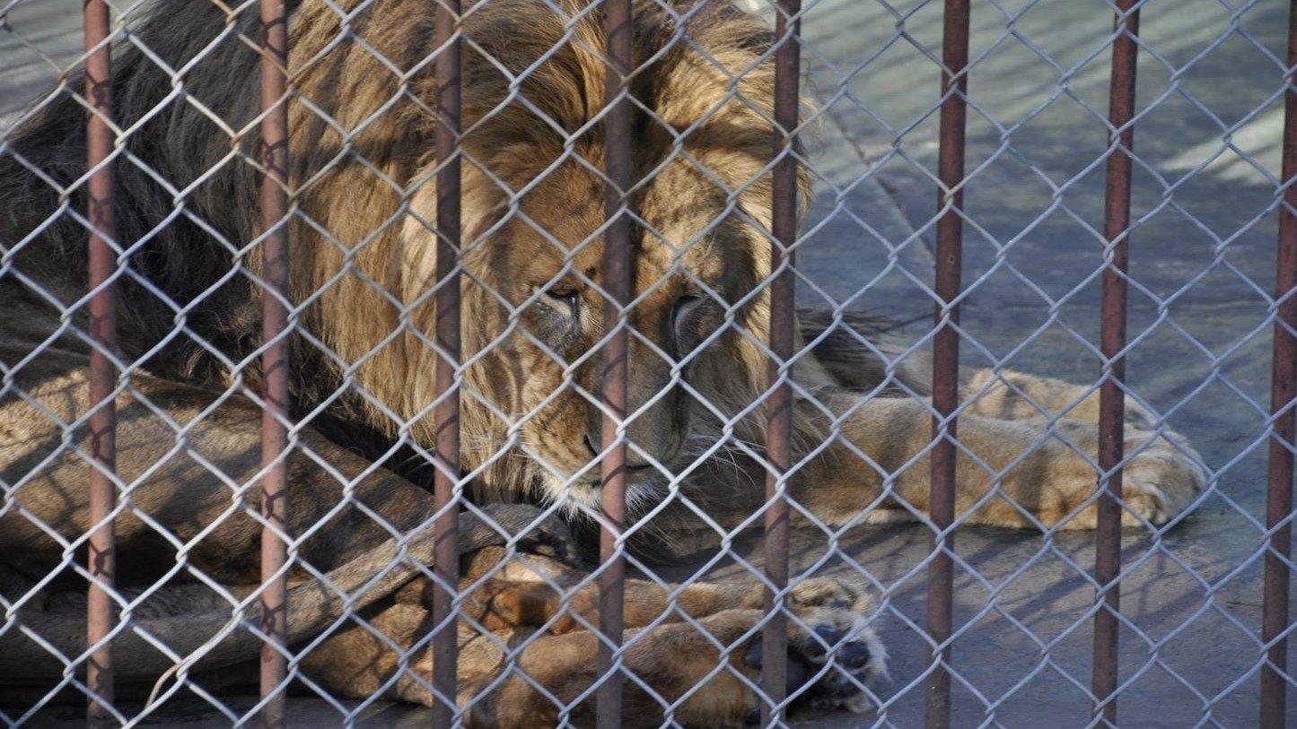 Petition cierre del zool gico de san carlos for Intendencia maldonado
