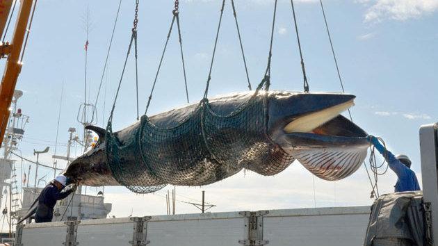 Japan fails to lift whaling ban