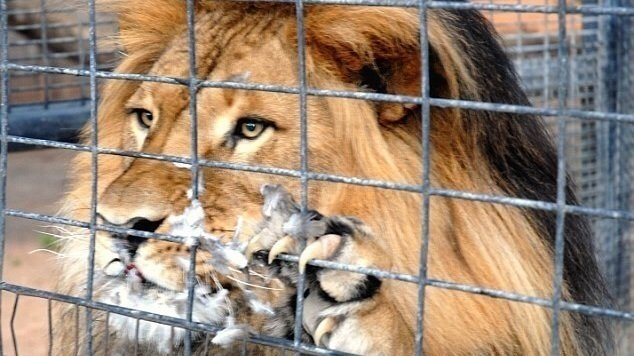Petition · Help privately owned exotic animals · Change org