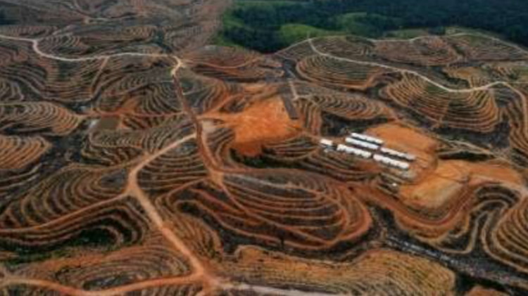 Does Costco Do Oil Changes >> Petition Costco Find An Alternative To Palm Oil