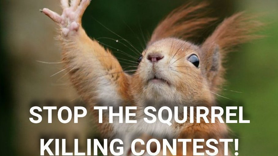 Petition · STOP the Cruel Squirrel killing contest in Germantown, NY! STOP  The Squirrel Scramble! · Change.org