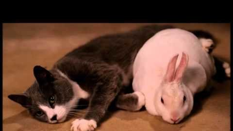 Petition · Netflix Netflix Give Bunny and Kitty from