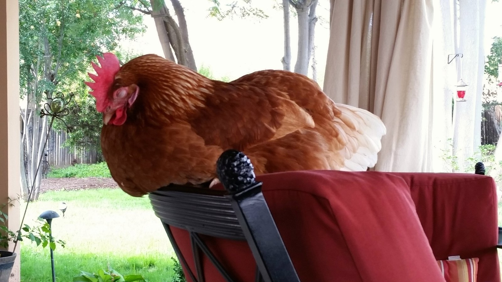 petition san jacinto city counsel backyard chickens in san