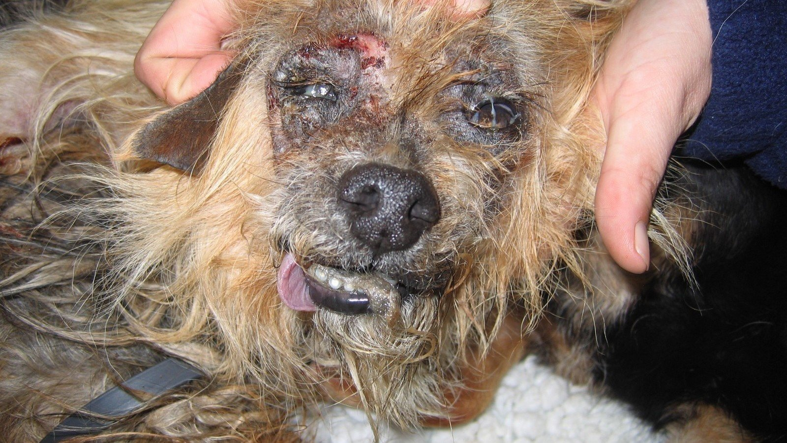 an overview of the animal cruelty in the united states The humane society of the united states (hsus) is one of the largest such  of  issues, including animal fighting and cruelty, factory farming, the fur trade, sports .