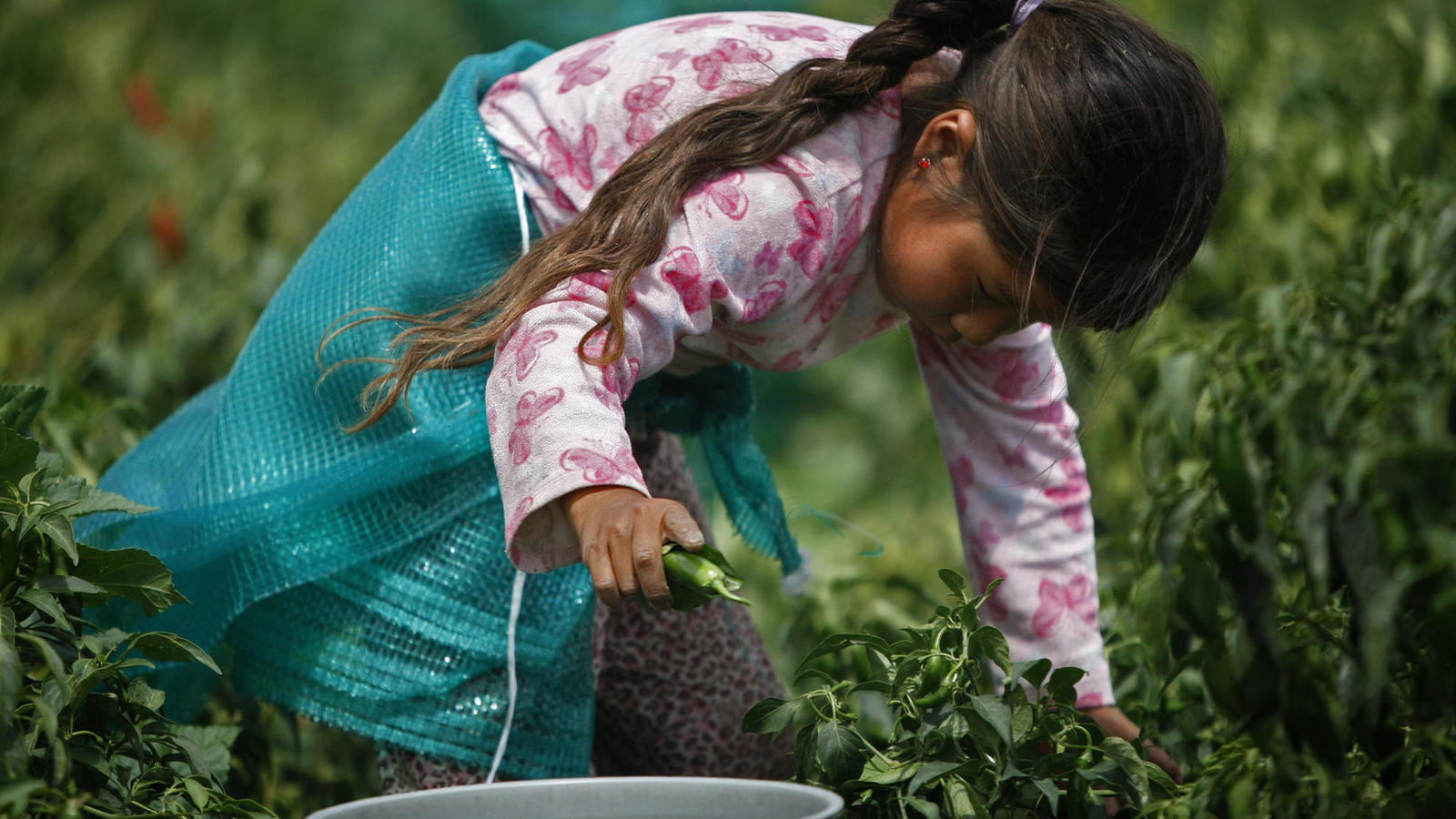 child labor in mexico Facts and figures united mexican and send their children to private schools in mexico before enrolling although more than 23 percent of the labor force is.