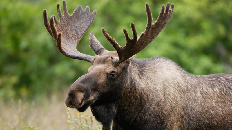 Petition The Meme Team Make The Plural Of Moose Meese Change Org