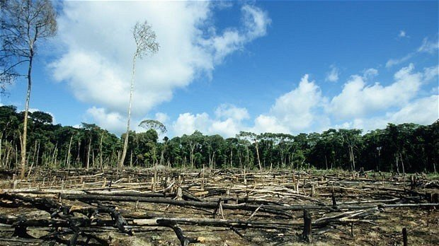 the growing concerns over the rainforest depletion worldwide But a growing body of experimental evidence suggests that pigs, both wild and domestic, could be a hidden source of ebola zaire - the most deadly form the reality is that they are contained and they remain local, if it was really an airborne virus like influenza is it would spread all over the place, and.