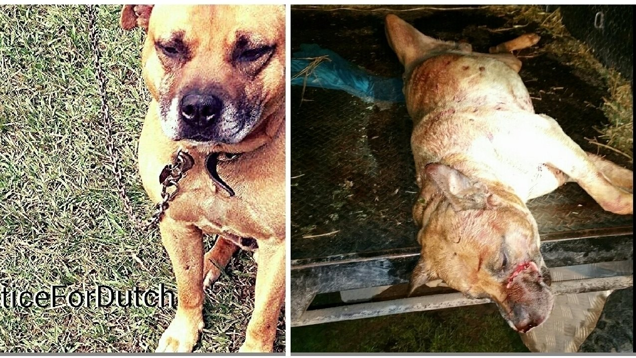 Petition 183 Rspca Tony Abbott Jail Time For People