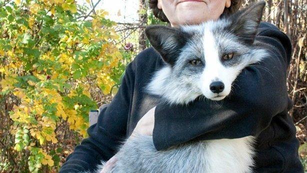 Petition · New York State Legislature: Legalization of domestic pet