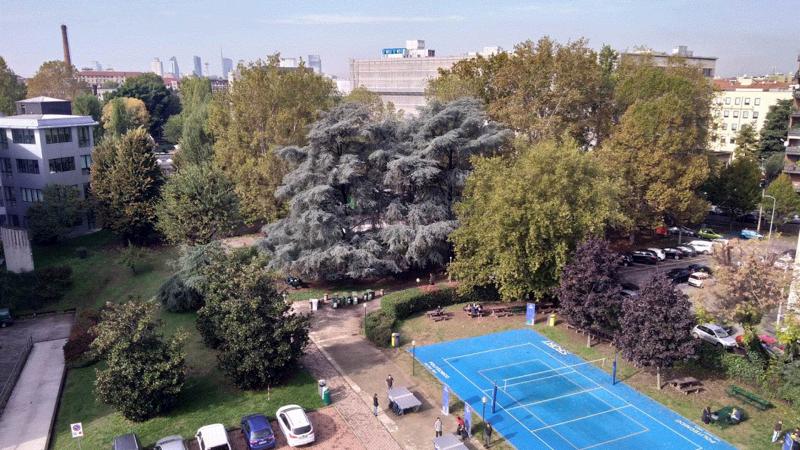 Salviamo gli Alberi del Campus Bassini del Politecnico di Milano