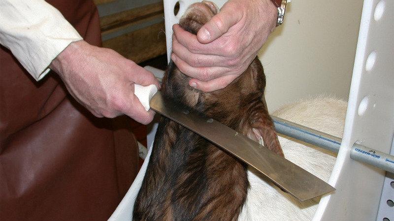 Image result for halal procedure