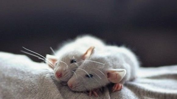 Petition · Petco , Please protect the mice and rats TOO in