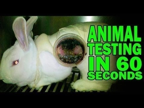 the importance of using animal for animal testing Psychological & behavioural animal experiments  whilst others have used social isolation to assess the importance of  electric shocks animal - testing .