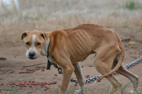 Petition · Put in Place an Anti-Tethering Ordinance for