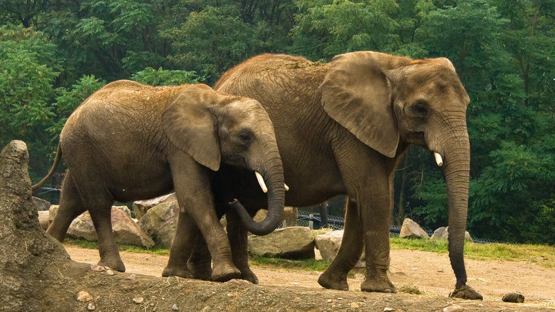 petition  u00b7 pittsburgh zoo  stop using dogs to scare your