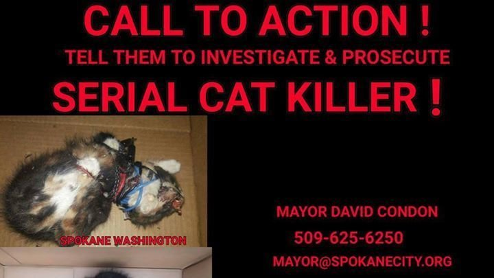 petition  u00b7 contcting the right people in power there and petitioning them  stop serial cat