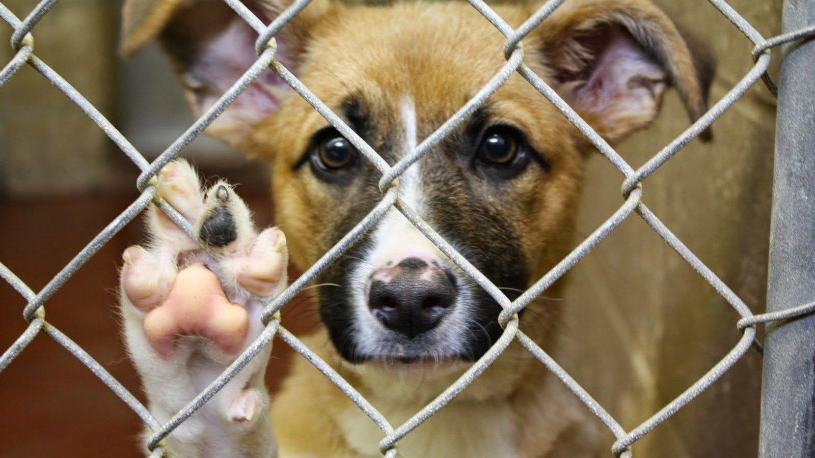 Petition 183 Peta Stop Animal Testing 183 Change Org